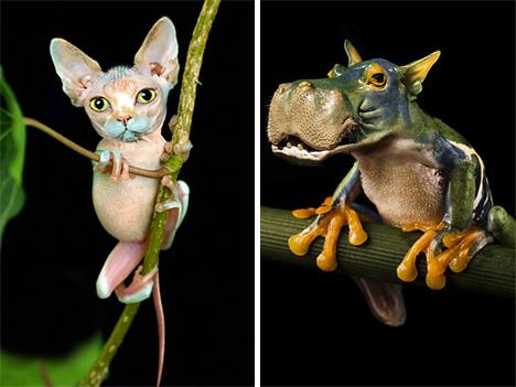 Jan Oliehoek cat and hippo frogs
