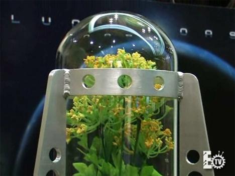 moon plant 2