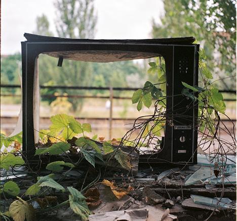 post-apocalyptic plants