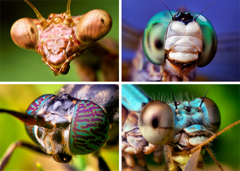 bug macro photographs