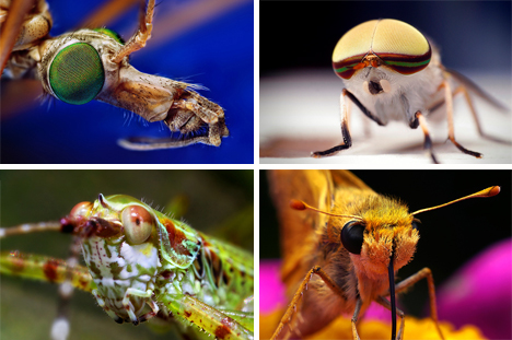 close up insect photographs