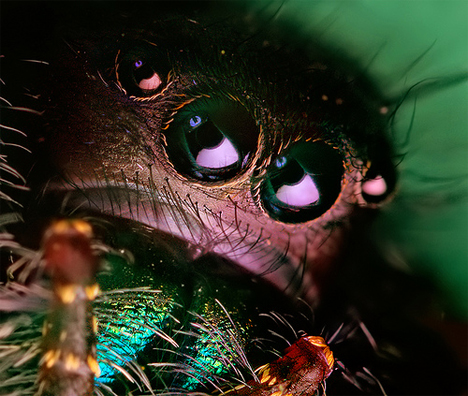 closeup spider face