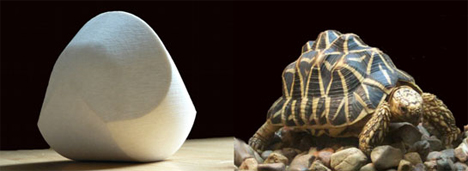gomboc and tortoise