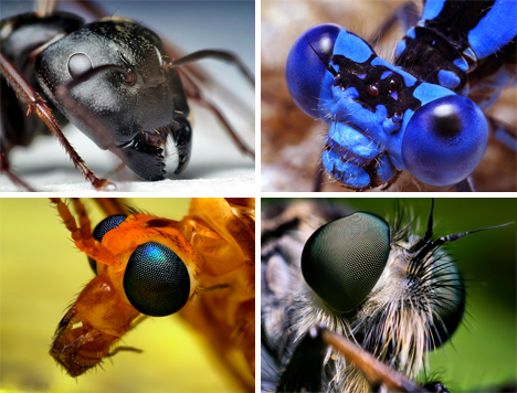 insect macro photos