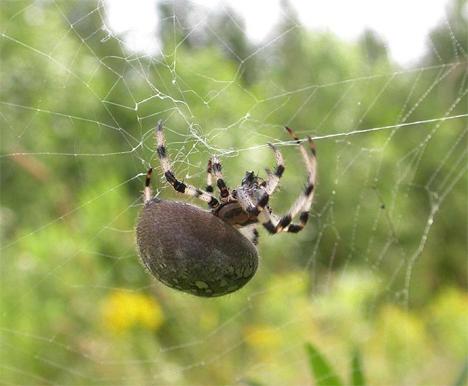 metal infused spider silk