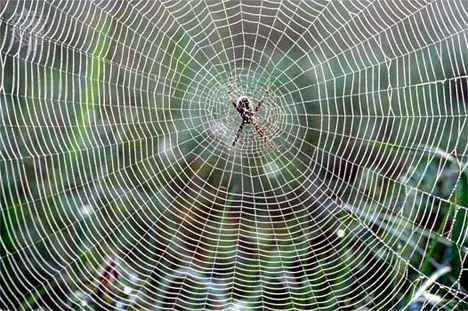 super strong spider silk