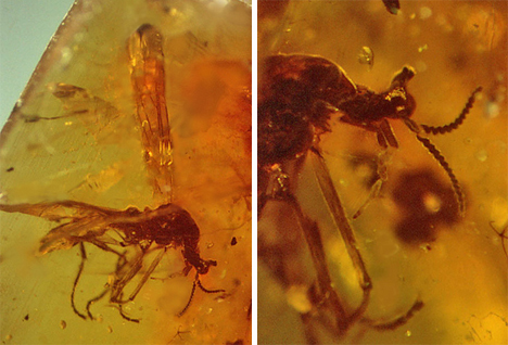 unicorn fly encased in amber
