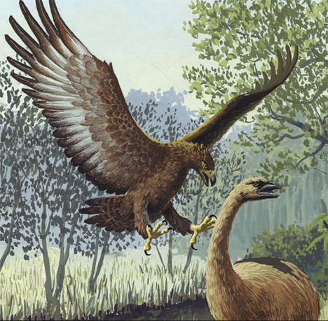 haast's eagle swooping
