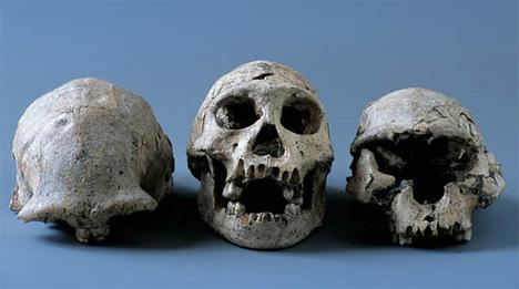 georgia skulls