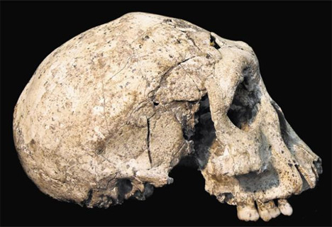 homo erectus georgia skull