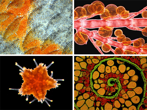 photomicrography pictures