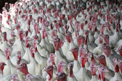 turkey farm biofuel