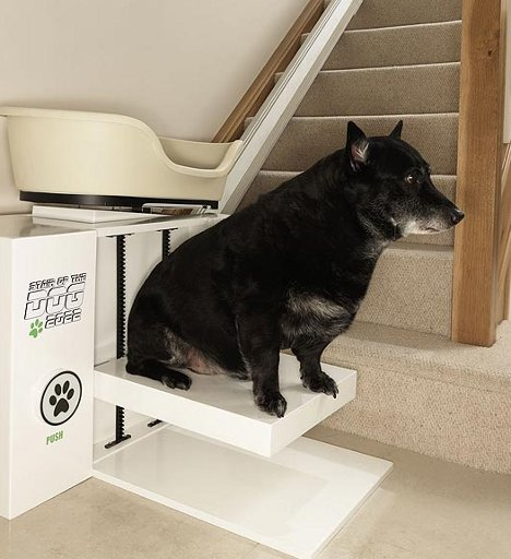 Pet Steps For Dogs Uk