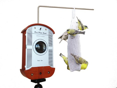 Bird feeder for smartphones