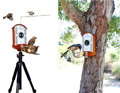 wildlife photo booth