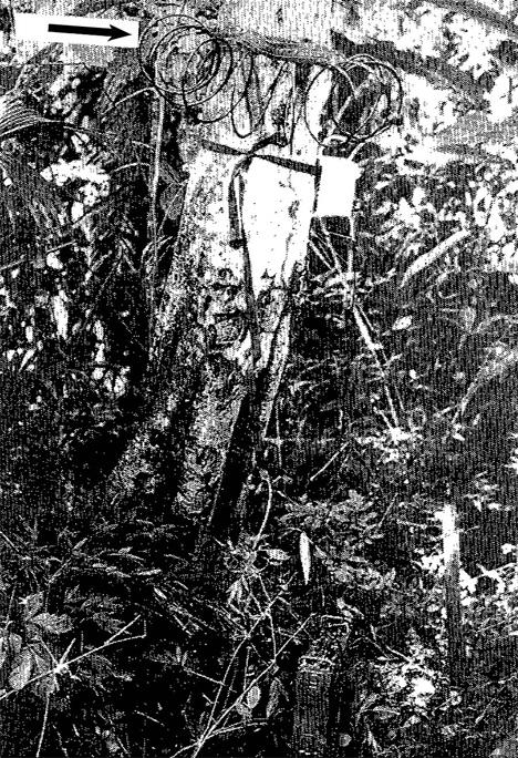 forest radio station
