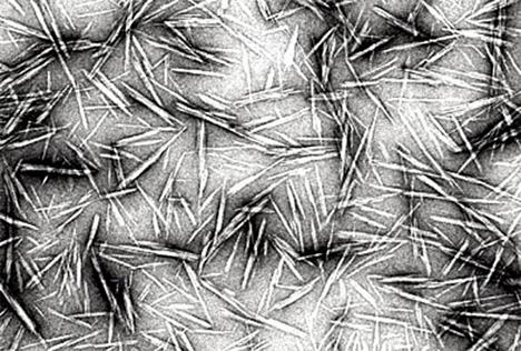 cellulose nanocrystals