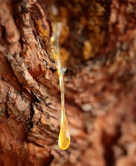 pine sap plastic