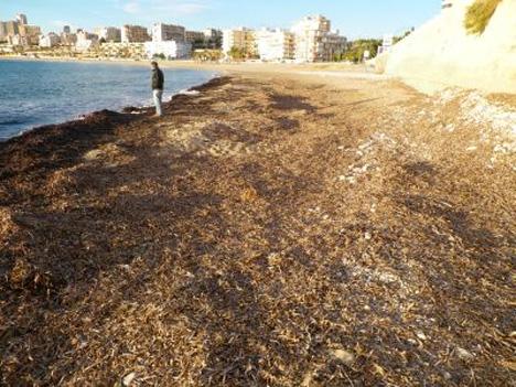 rotting seaweed on beach