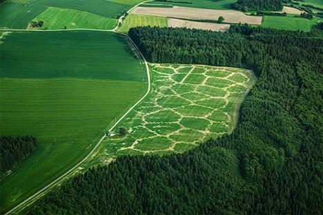 algorythm printed crops