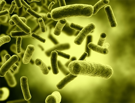 clean biofuel made from e coli bacteria