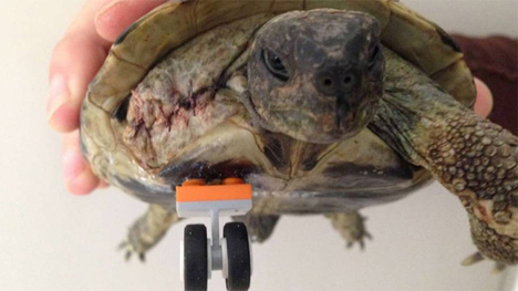 schildi the bionic lego leg turtle