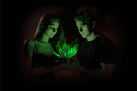 genetically engineered glowing houseplant