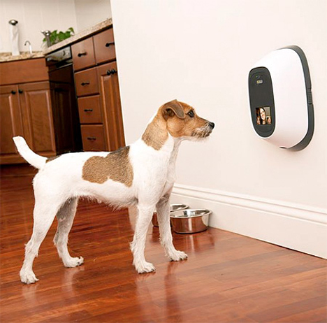 video phone gives you mobile quality time with your pet
