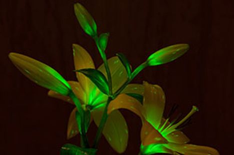 starlight avatar glowing plant