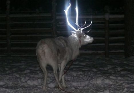 finland glow in the dark reindeer antlers