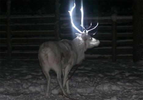 finland glow in the dark reindeer antlers
