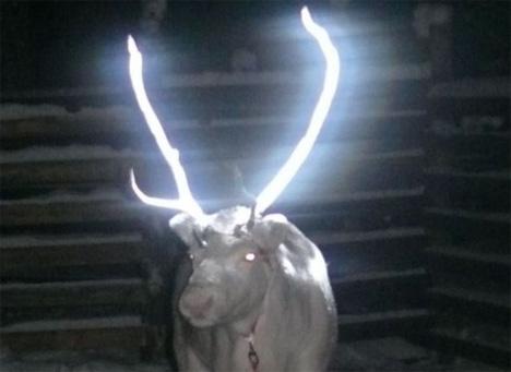 glow in the dark reindeer antlers