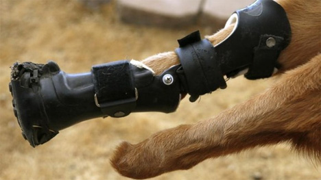 prosthetic dog limbs