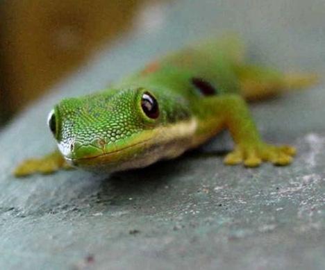 sticky gecko feet