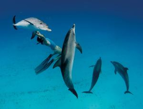 speaking with dolphins