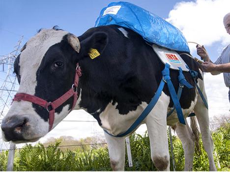 bovine methane power
