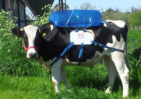methane collection from cow farts
