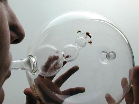 bees diagnosing diseases