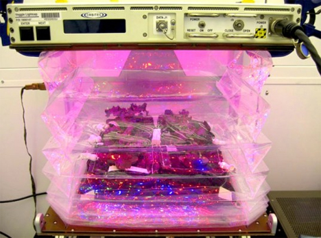 veggie growing chamber iss nasa space vegetables