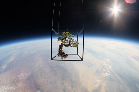 bonsai tree in space