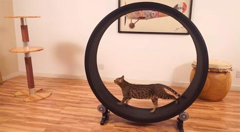 one fast cat hamster wheel exercise wheel