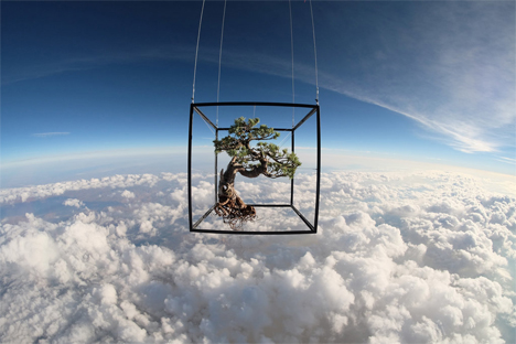 orbiting bonsai tree