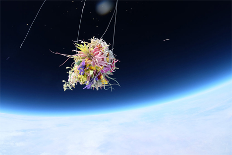 orchid flower bouquet in space