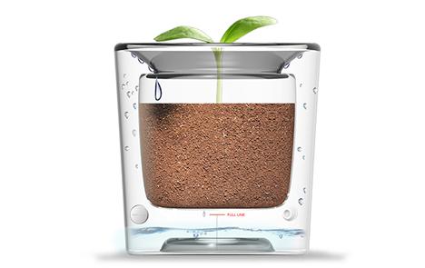 glass self-watering flowerpot