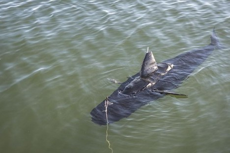 ghostswimmer shark drone