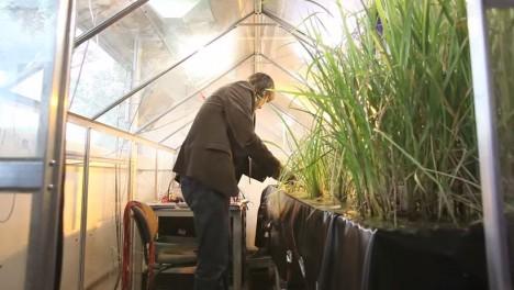 plant power lab experiment copy