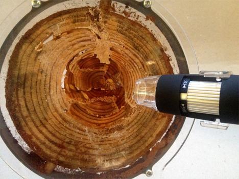 termitat with microscope