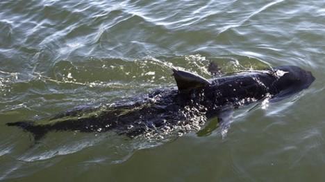 us navy ghostswimmer robotic shark drone
