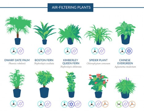 pollution houseplant guide