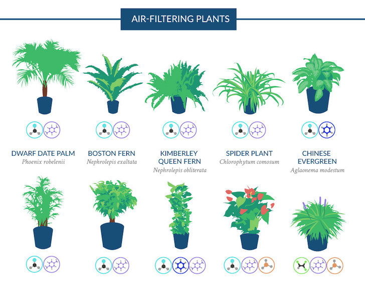 NASA Guide to Air-Filtering Houseplants | Love The Garden